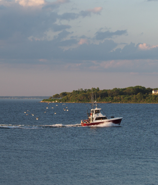 A boat entering West Harbor trailed by seagulls