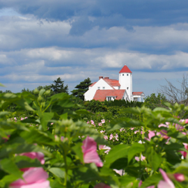 A red-roofed white house with pink mallows blooming in the forefront.